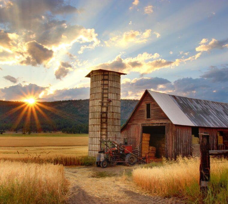 Zastosowanie dużych hal blaszanych w rolnictwie